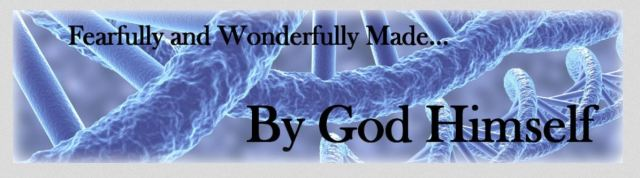 fearfully-made-banner